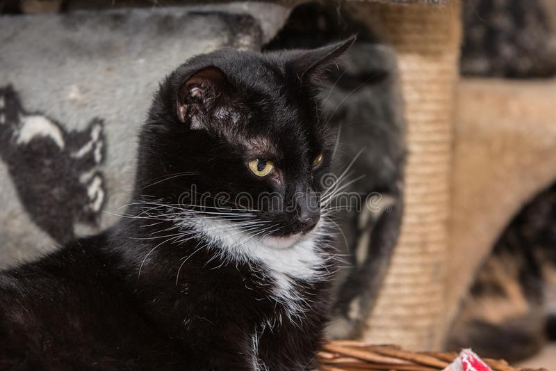 European cat in animal shelter. Portrait of european type cat in animal shelter in belgium royalty free stock photo