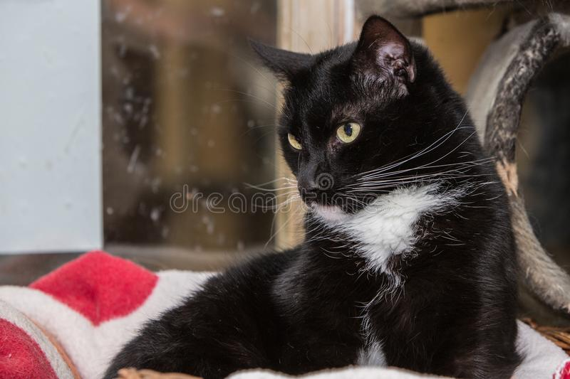 European cat in animal shelter. Portrait of european type cat in animal shelter in belgium stock photography