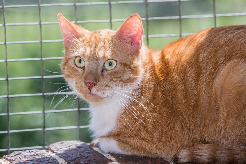 European cat in animal shelter. Portrait of european type cat in animal shelter in belgium stock images
