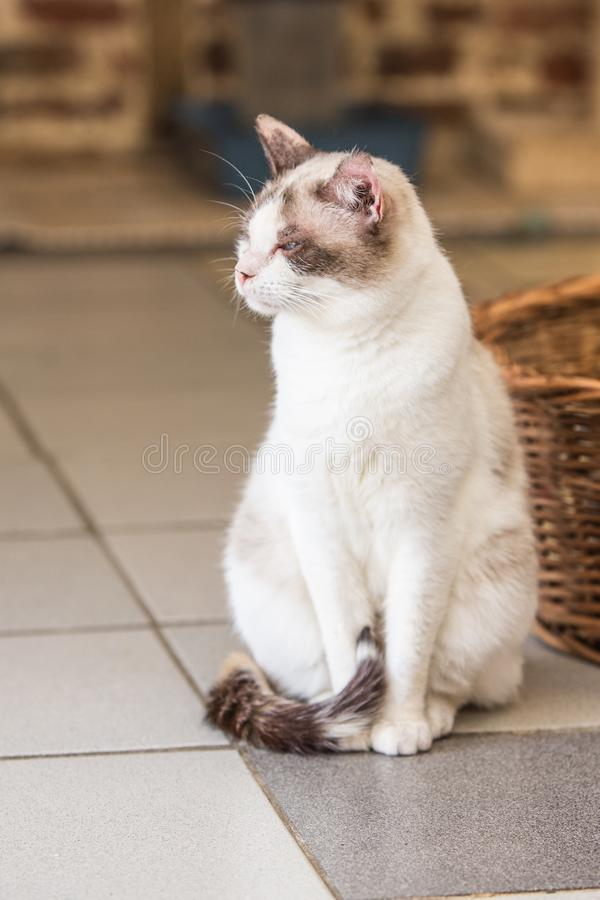 European cat in animal shelter. Portrait of european type cat in animal shelter in belgium royalty free stock images