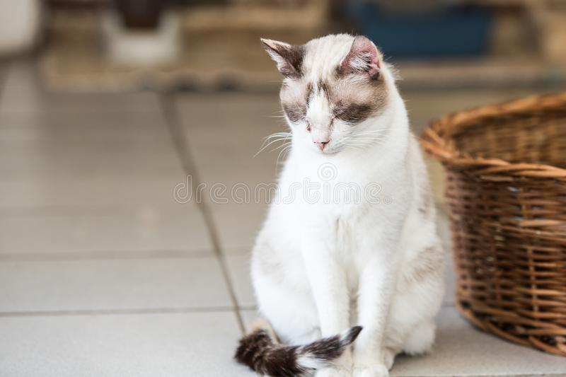 European cat in animal shelter. Portrait of european type cat in animal shelter in belgium royalty free stock photography