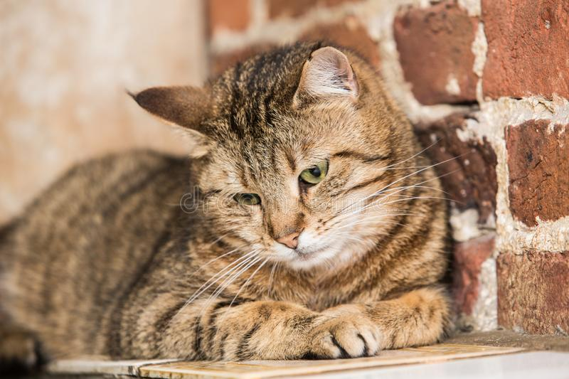European cat in animal shelter. Portrait of european type cat in animal shelter in belgium royalty free stock photos