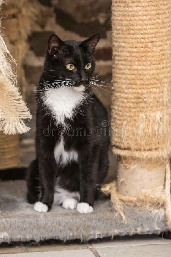 European cat in animal shelter. Portrait of european type cat in animal shelter in belgium stock image