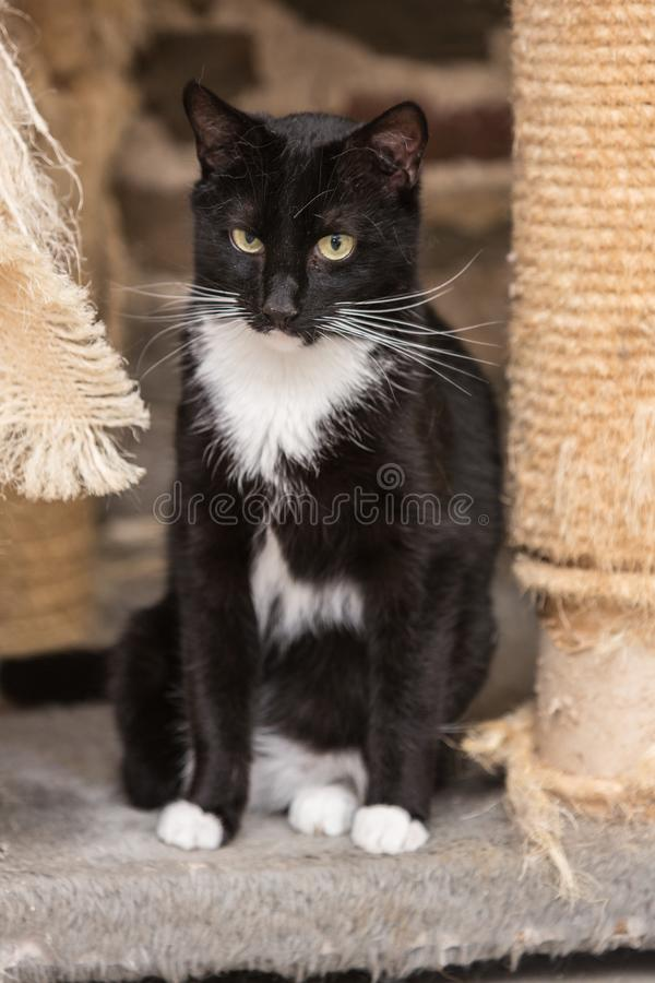 European cat in animal shelter. Portrait of european type cat in animal shelter in belgium royalty free stock image