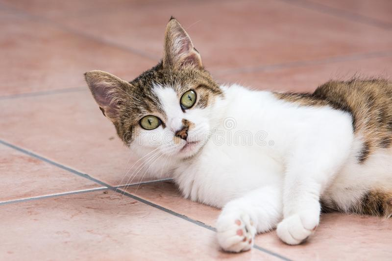 European cat living in belgium. Portrait of an european cat in animal shelter in belgium stock photography