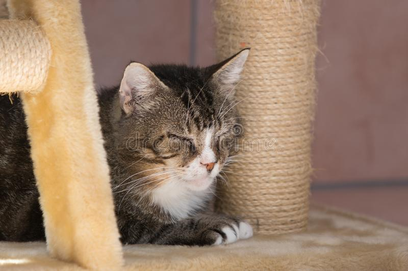 European cat living in belgium. Portrait of an european cat in animal shelter in belgium stock image