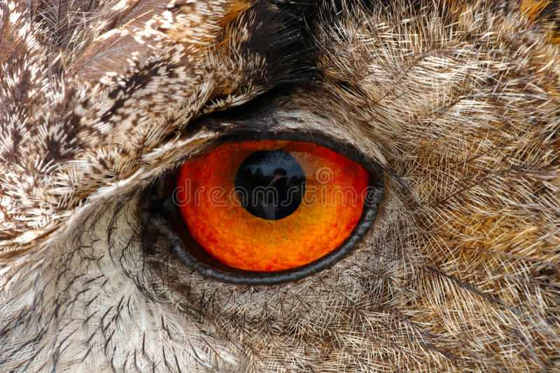 European Eagle Owl Eye Closeup. Closeup of a European Eagle Owl eye showing the intense detail of the iris and feathers stock images
