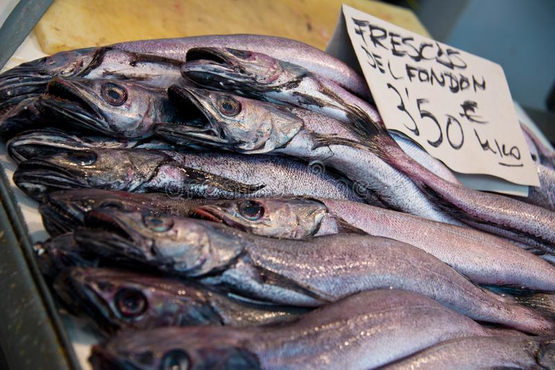 European hake merliccius merluccius on fishmonger`s market stall royalty free stock images