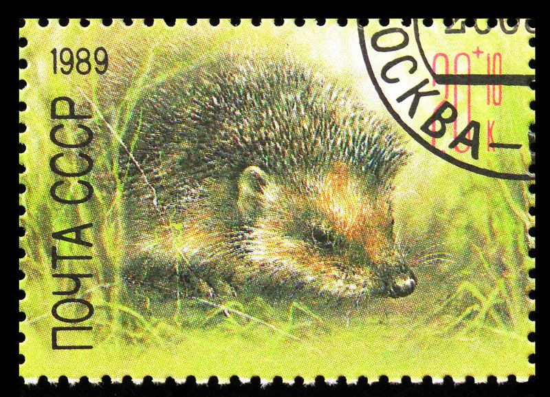 European Hedgehog (Erinaceus europaeus), ZOO Relief Fund serie, Circa 1989 arkivbilder