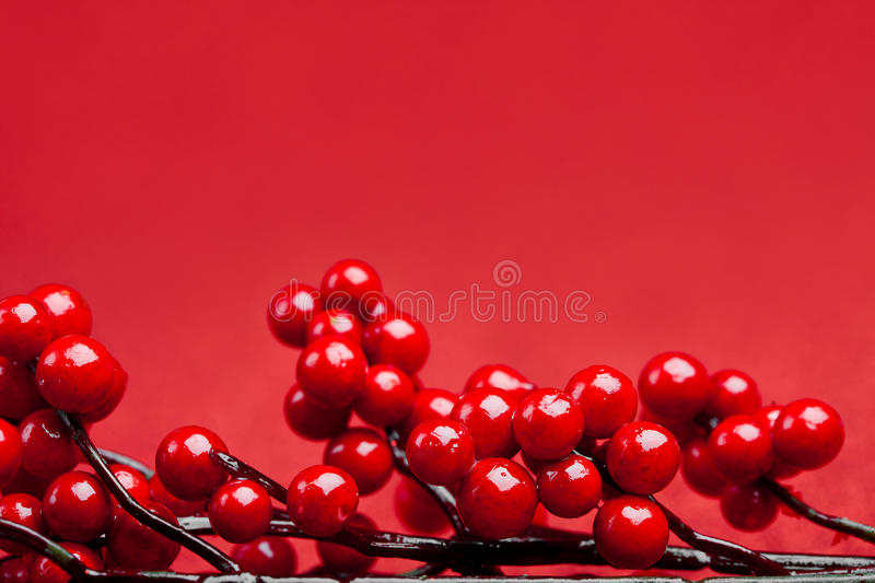 European holly on red background. (shallow DOF stock photography