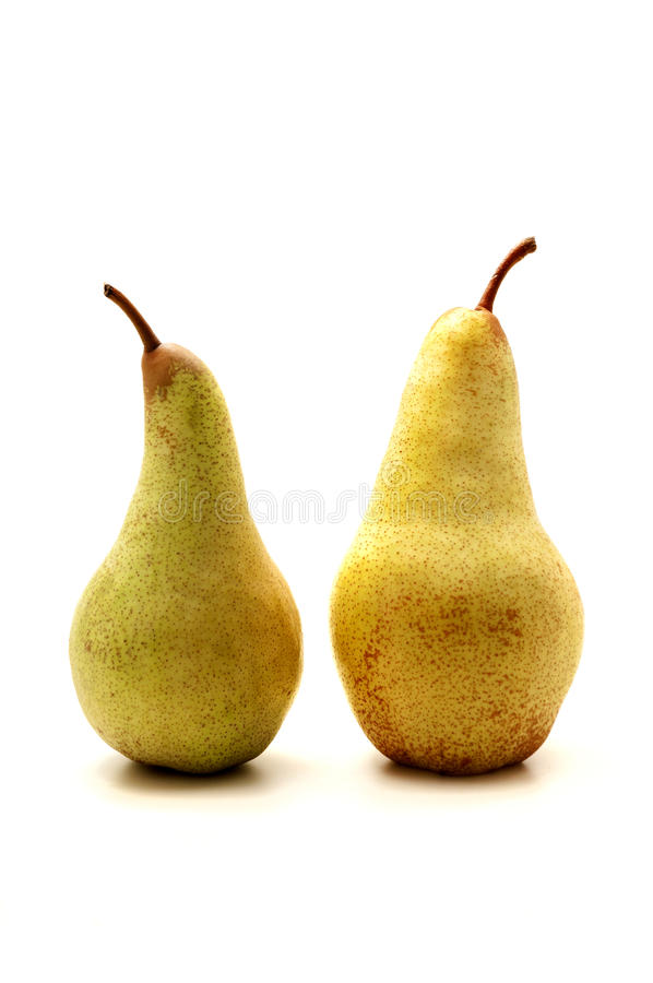 Download European pears stock photo. Image of pyrus, pears, abate - 21891570