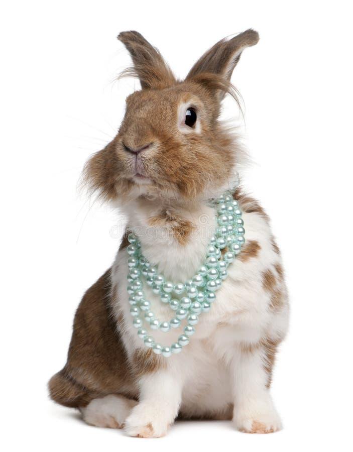 European Rabbit wearing pearl necklaces stock photo