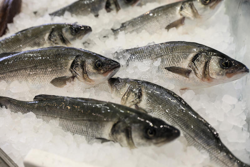 European seabass on ice in fish shop for sale. Fresh European seabass or Dicentrarchus labrax, lavpaki on ice in the greek fish shop for sale. Horizontal. Close royalty free stock images