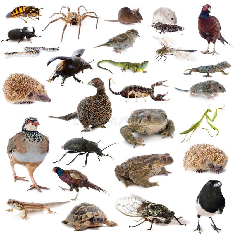 European wildlife. In front of white background stock photo