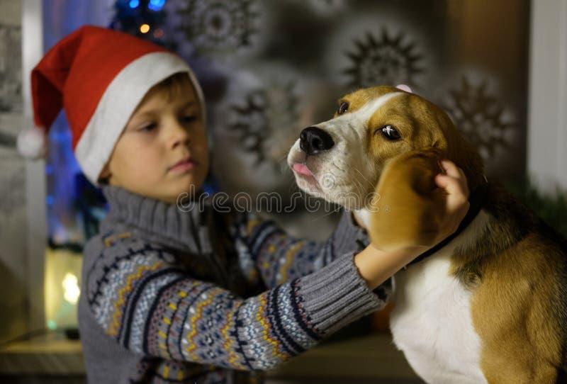 Europeisk pojke i ett rött lock med hennes beaglehund fotografering för bildbyråer