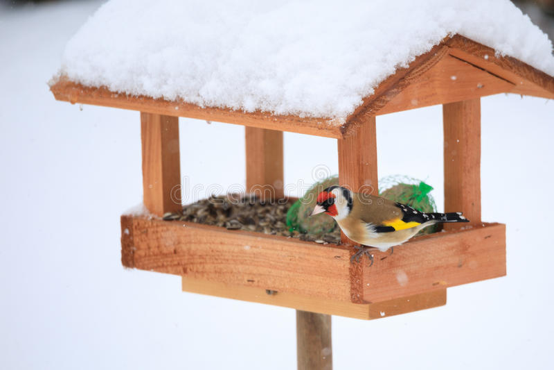 Europeisk steglits i enkel fågelförlagematare arkivbild