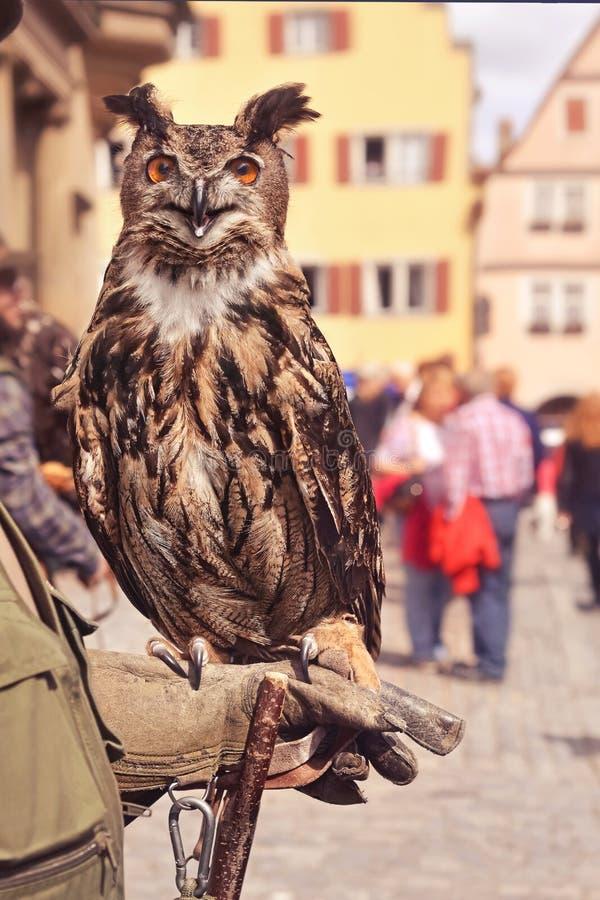 Europejski orzeł sowy obsiadanie na tresera ` s ręce zdjęcie stock