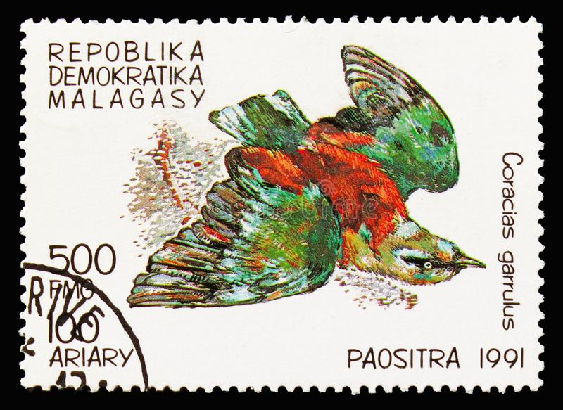 Europejski rolownik, ptaka seria około 1991, (Coracias garrulus) obrazy royalty free
