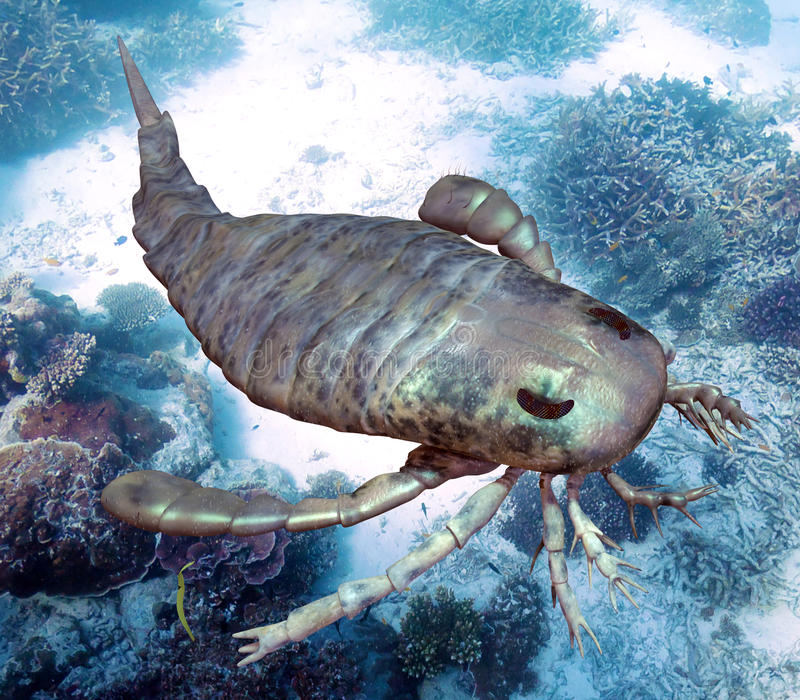 Eurypterus Scanning Seafloor. An illustration of eurypterus exploring sea floor. Eurypterids are related to arachnids and include the largest known arthropods to vector illustration
