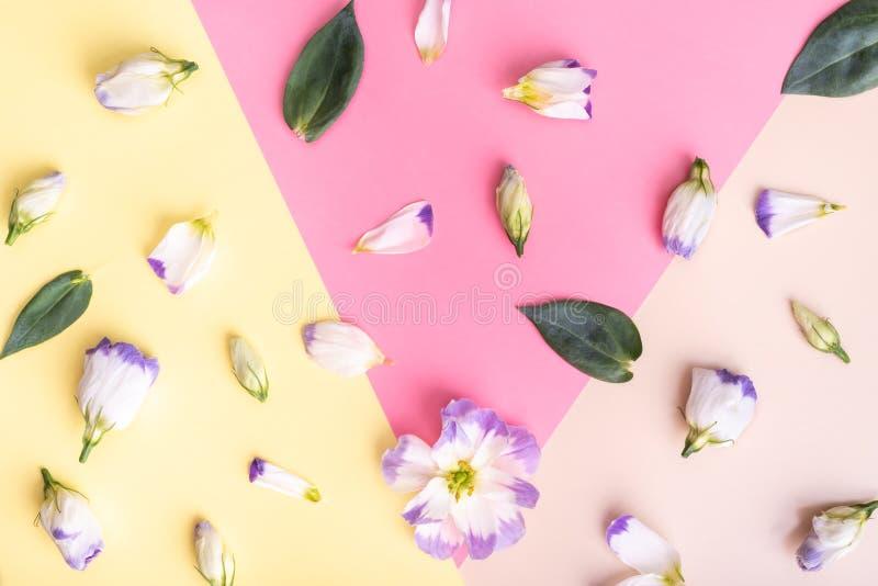 Eustoma branco no fundo multicolour Vista lisa imagem de stock