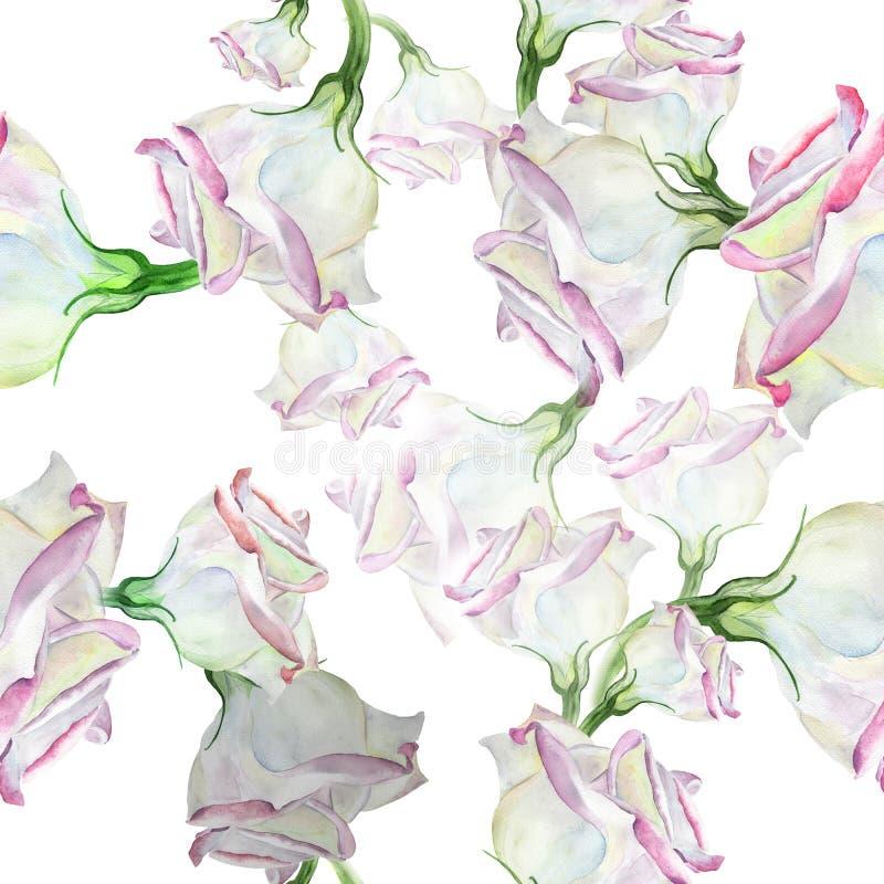 Eustoma - flores watercolor Composición decorativa en fondo de la acuarela Gráfico inconsútil del fondo stock de ilustración