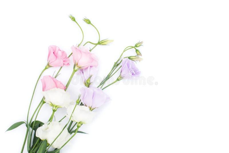 Eustoma kwiat na białym tle obrazy royalty free
