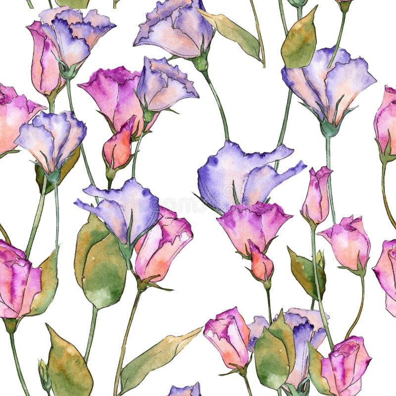 Eustoma rosa e porpora Fiore botanico floreale Modello selvaggio del wildflower della foglia della molla illustrazione di stock