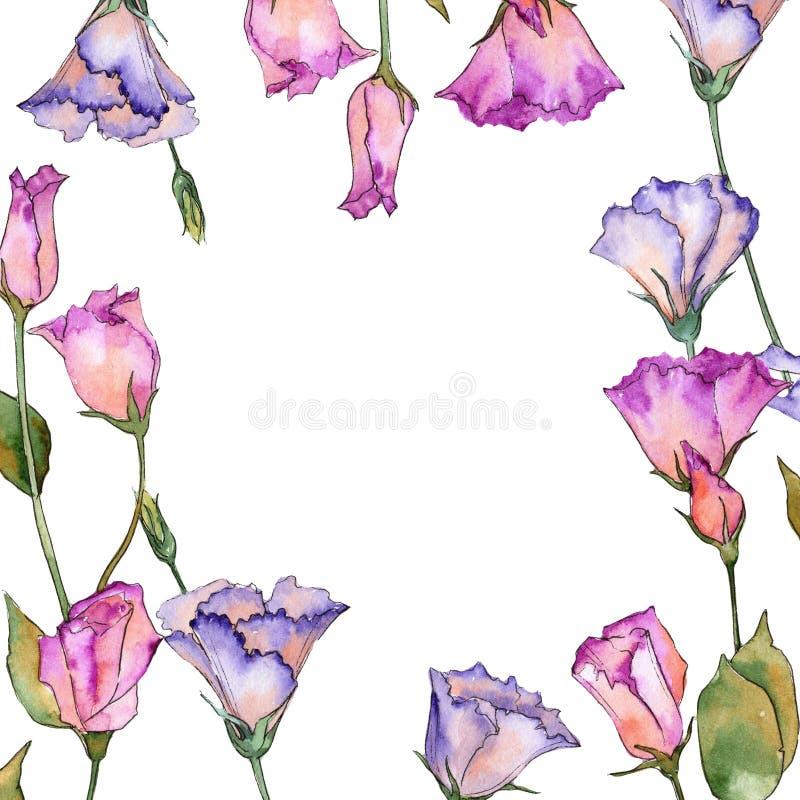 Eustoma rosa e porpora Fiore botanico floreale Struttura selvaggia del wildflower della foglia della molla illustrazione vettoriale