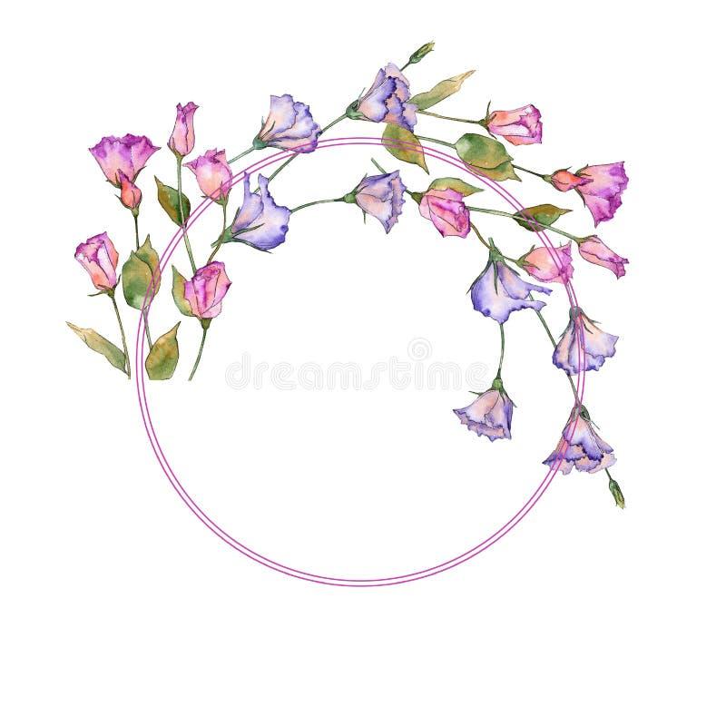 Eustoma rosa e porpora Fiore botanico floreale Struttura selvaggia del wildflower della foglia della molla royalty illustrazione gratis