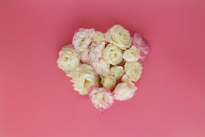 Eustomas sous forme de coeur sur un fond rose photographie stock