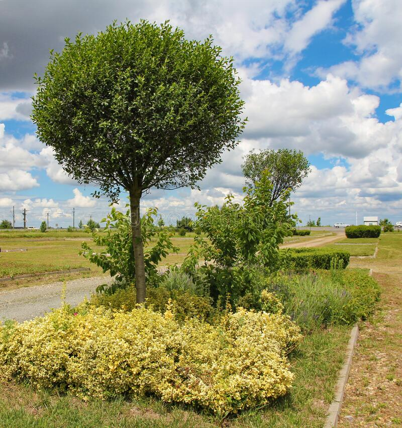 Free Eutopia Garden - Arad, Romania Royalty Free Stock Photography - 215819737