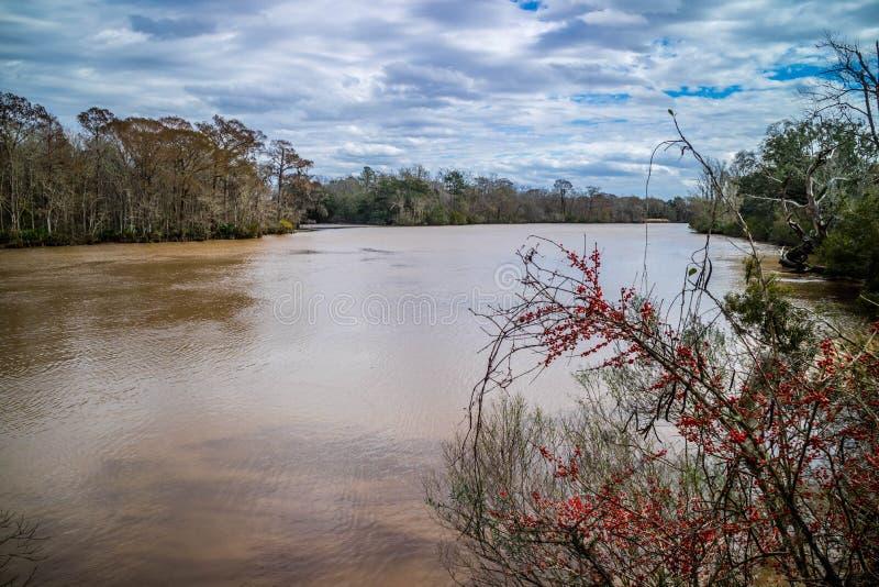 Evangeline Pond bonita em St Martinville, Louisiana imagem de stock