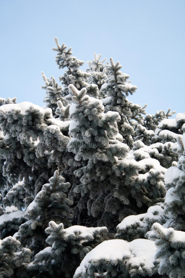 Download Eve stock image. Image of background, nature, snowy, details - 12573823