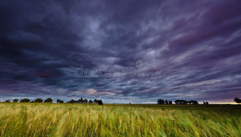 Eve Storm stockfotos