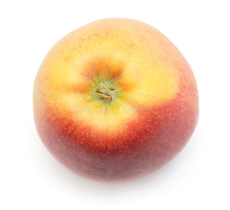 Evelina jabłko odizolowywający zdjęcia stock