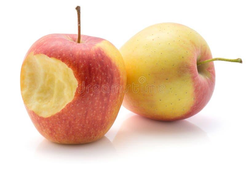 Evelina jabłko odizolowywający fotografia royalty free