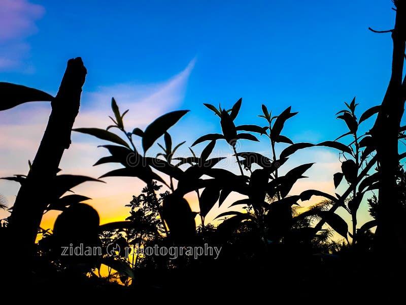 Evening. Sunlight sunset trees blue sky vector illustration