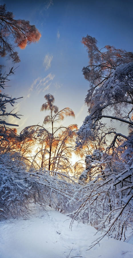 Download Evening above snowy forest stock photo. Image of park - 19010804