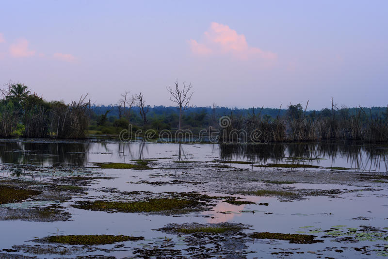 Evening blisko jeziora fotografia stock