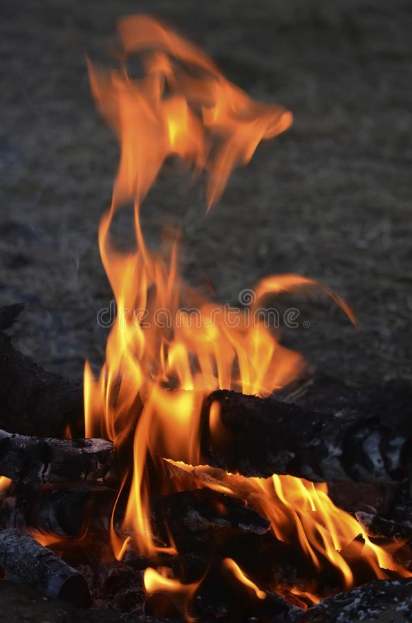 Flames of evening fire. Large royalty free stock photography