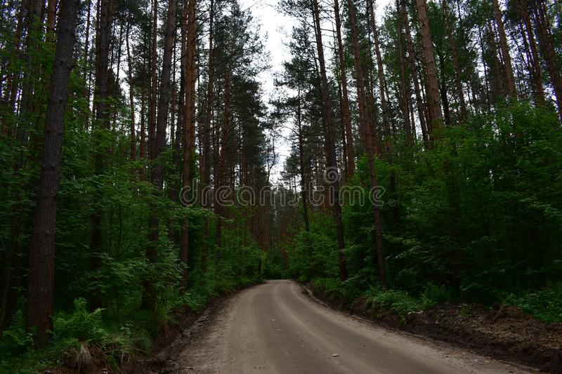 Evening boreal coniferous pine forest and the road separating the trees. Coniferous forest is the largest biome stock image