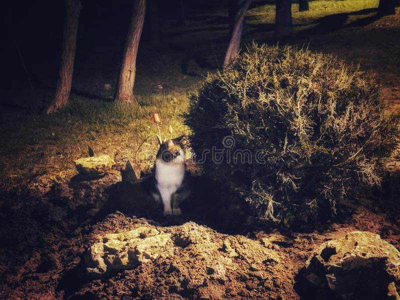 Evening cat in the park royalty free stock image