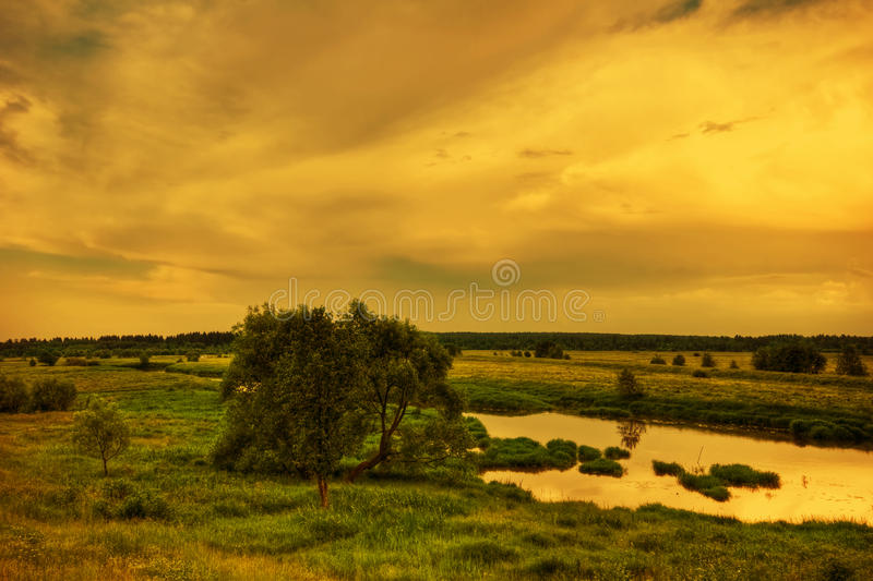 Evening field royalty free stock photo
