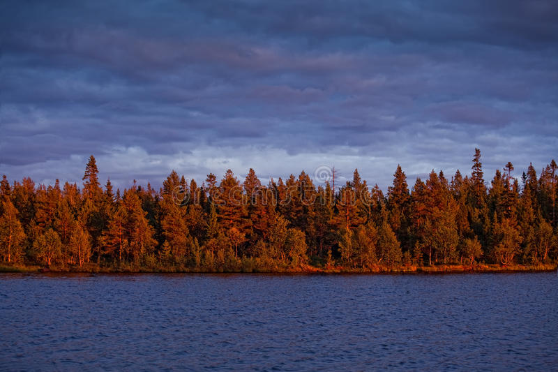 Download Evening forest stock photo. Image of pine, russian, sunny - 11261594