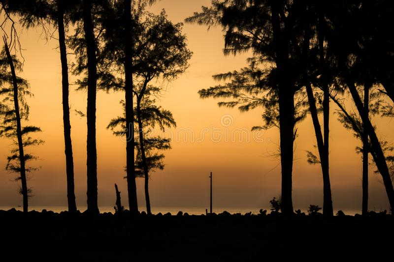 Evening forest, black silhouettes of coniferous trees against the background of the ocean promenade with tetrapods and a lamppost stock photography