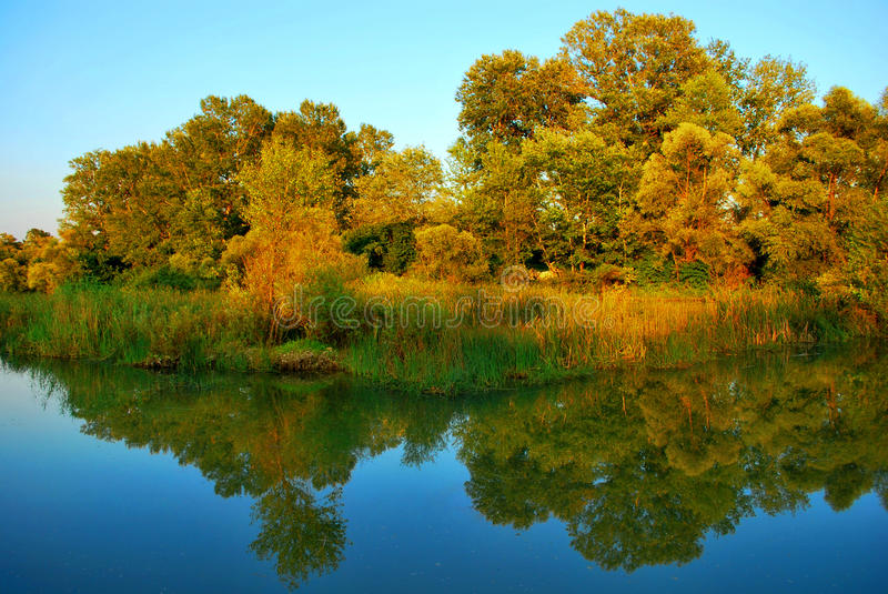 Download Evening lake stock photo. Image of evening, thrickets - 10841290