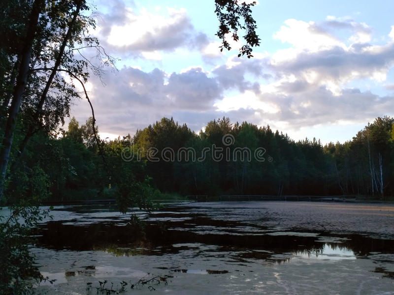 Evening lake with cloud sky. Quiet calm forest lake, covered with slime in the evening with cloud sky stock images
