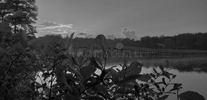 Evening at the lake royalty free stock image