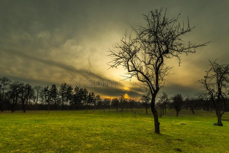 evening landscape. silhouette of a bare tree on a green lawn in a spring city park against a backdrop of a dramatic sunset stock images