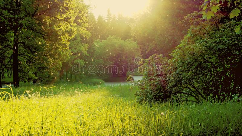 Evening landscape with the sun, greenery and a swarm of mosquitoes. royalty free stock photography